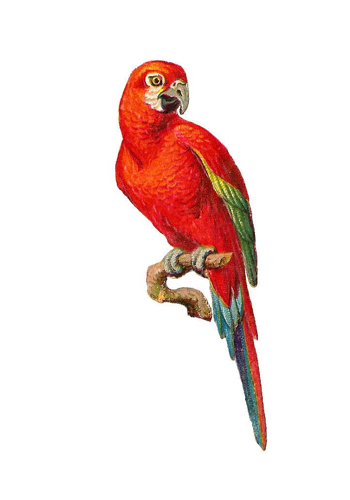 http://4.bp.blogspot.com/-KnWBe3okhyY/UeWsQXFSGBI/AAAAAAAAPlw/D1qEg2pOHAU/s1600/birdpage01.jpg