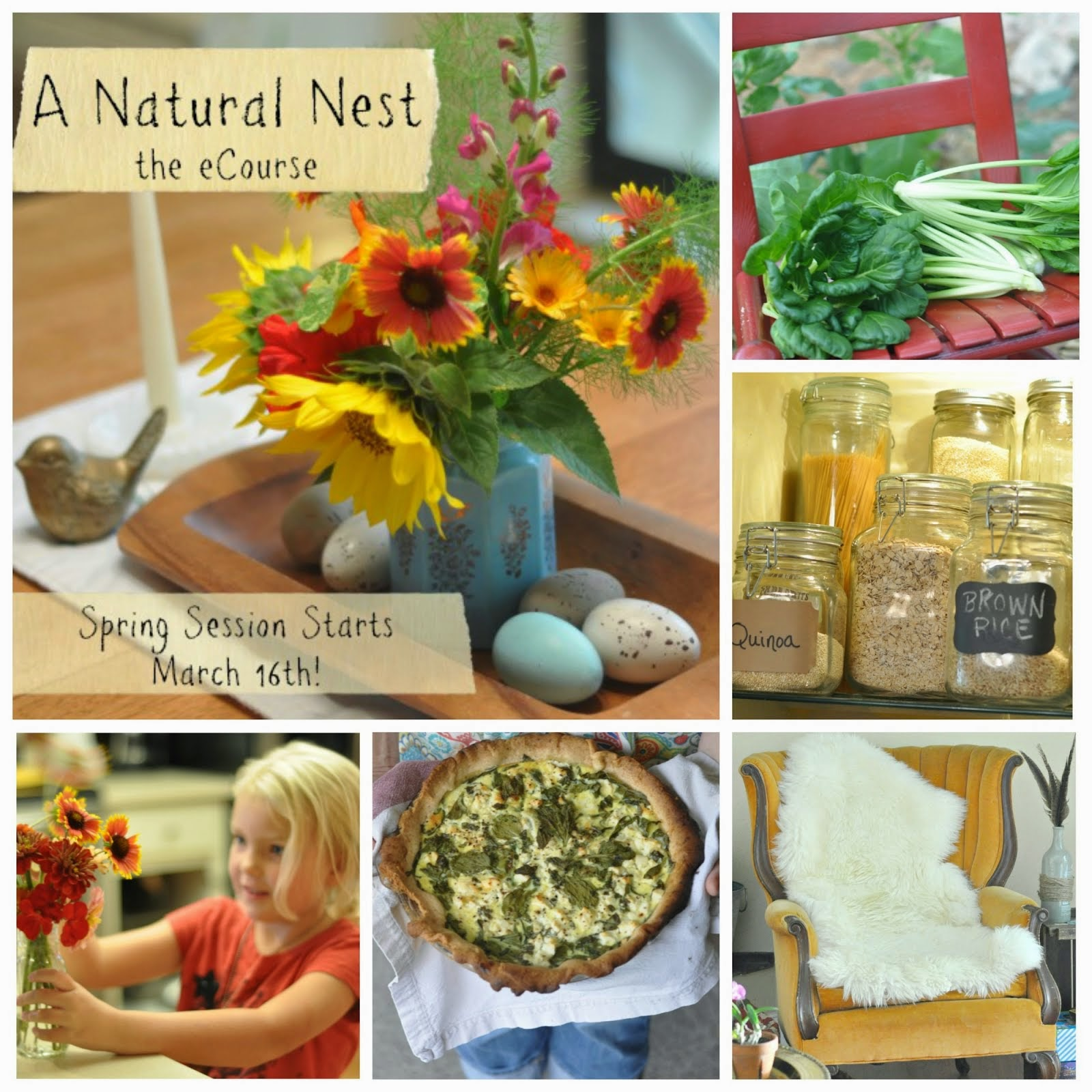 NEW! A Natural Nest, the eCourse