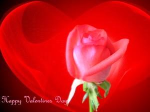 صور ورود وقلوب حمراء Happy Valentines Day 2013