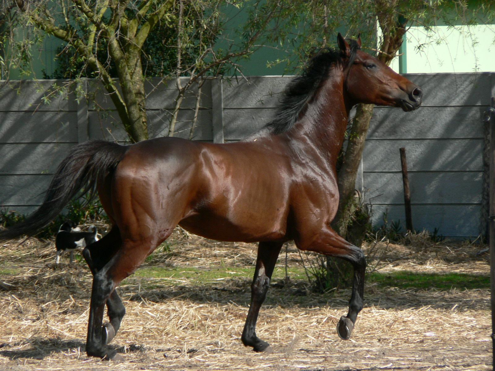 Must see   Wallpaper Horse Deviantart - Thoroughbreds+wallpapers+9  Image_312933.jpg