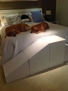 rampa para cães grandes