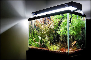 Modern Lighting Systems for Freshwater Aquarium Plants