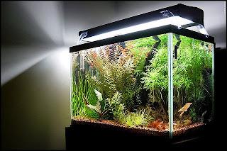 modern lighting systems for freshwater aquarium aquascape aquarium