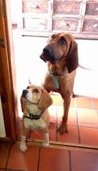 Coca y Niní ¡atentas al blog!