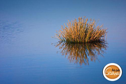 ما أجمل calm-water-with-reed