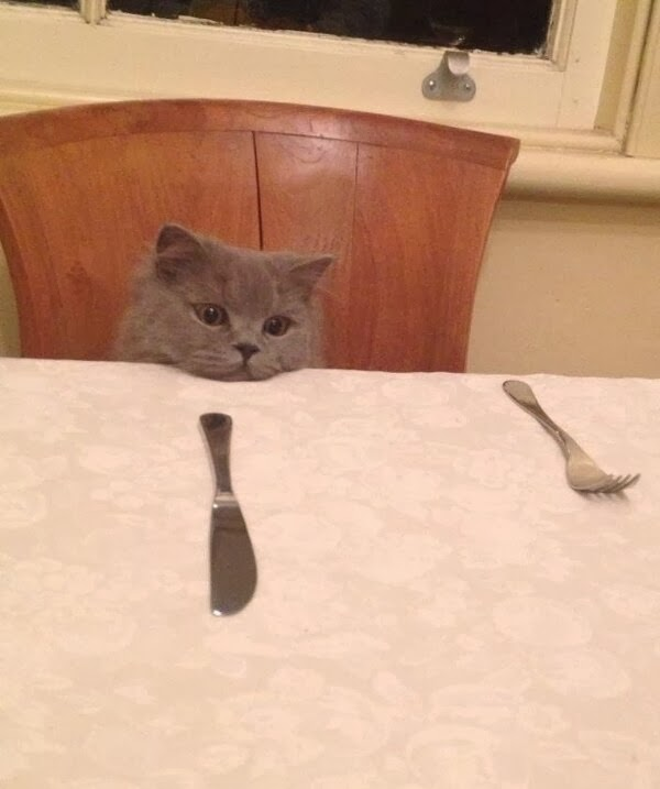 Funny cats - part 78 (35 pics + 10 gifs), cat pics, cat waits for dinner