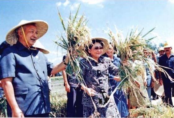 Image result for Pembangunan nasional di era Orde Baru