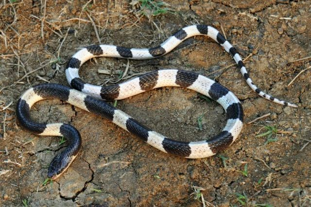 The Deadliest Snakes on the Planet (32 pics) ~ Amazing Facts