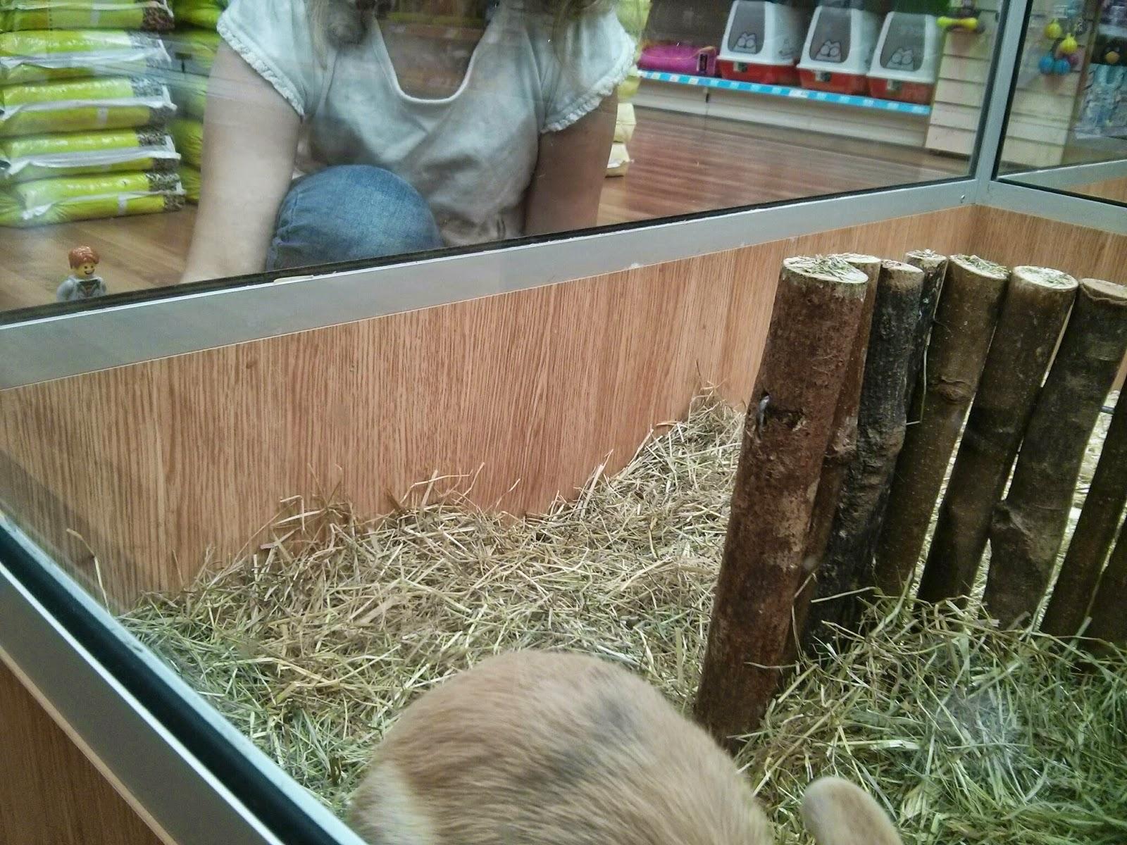 Kyle Emmett looking at Rabbits