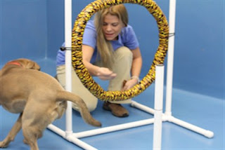Dog Training Possibilities
