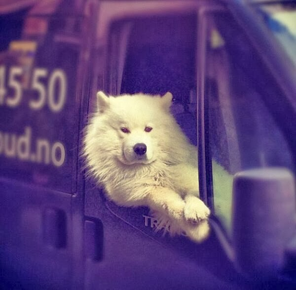 Cute dogs - part 4 (50 pics), dog pictures, dog in car ride