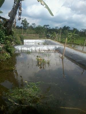 Cara Praktis Membuat Kolam Budidaya Ikan Nila