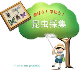 夏休みの昆虫採集の無料イラスト