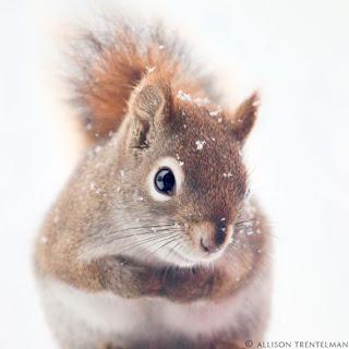 śnieg, zimowe inspiracje