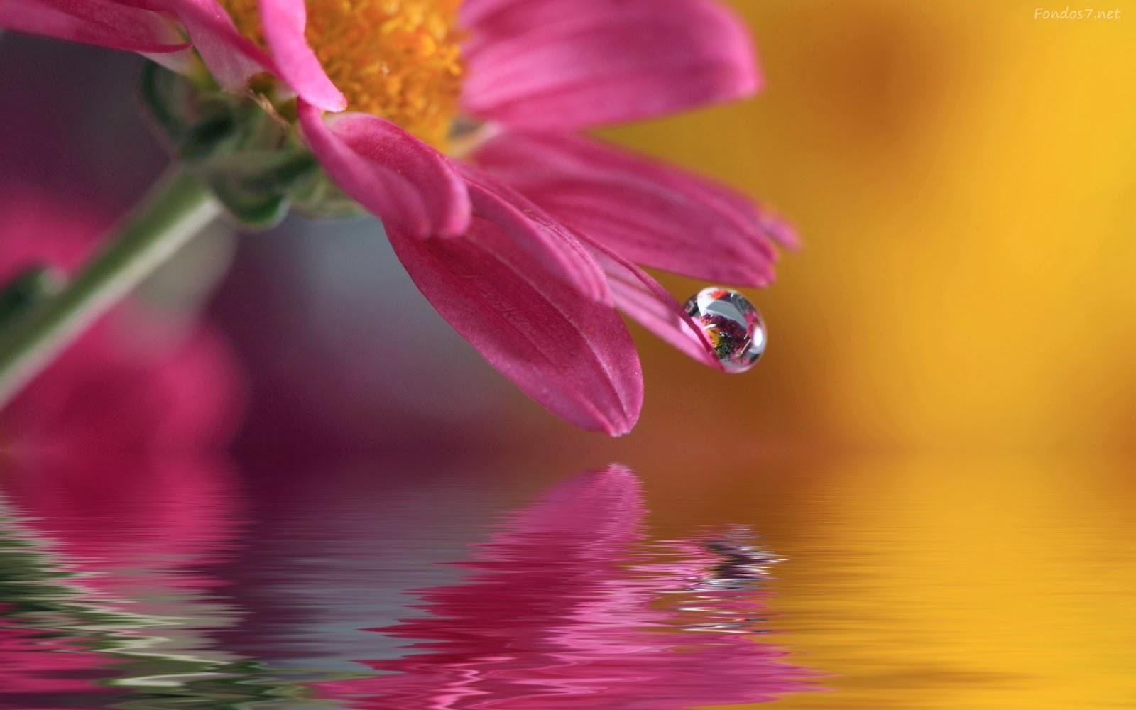 Poemas cortos al agua