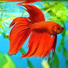 اسماك ملونة رائعة