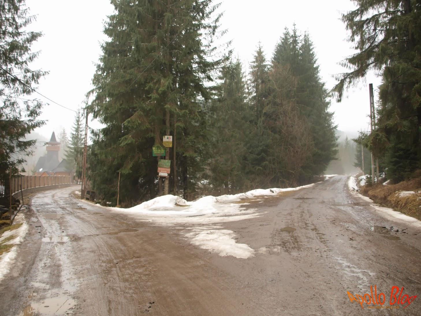 Intersectie cu drum forestier