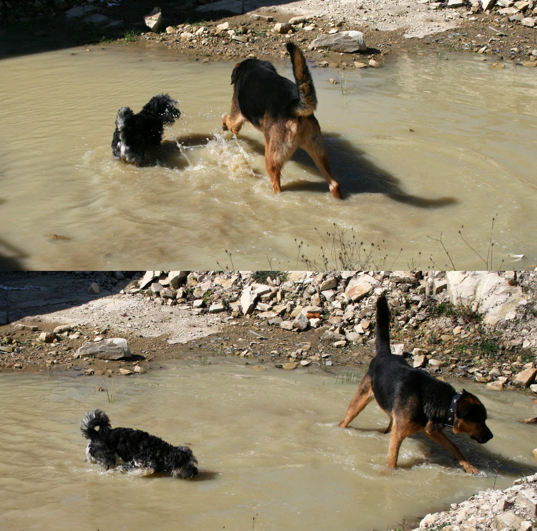Having lots of fun in the water