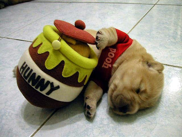 perro disfrazado de winnie pooh