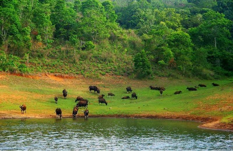 Periyar in Kerala