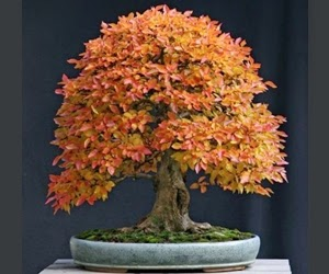 """<img src=""""bonsai17.jpg"""" alt=""""foto bonsai"""">"""