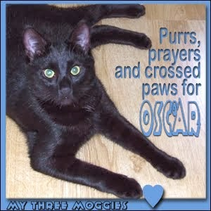 Oscar needs our purrs