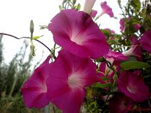 Flores de primavera...