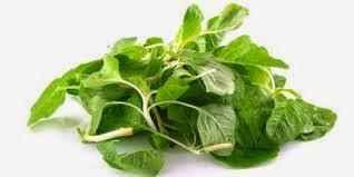 Bayam Makanan Pencegah Rambut Rontok