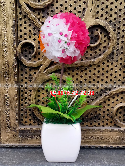 Hoa cẩm tú cầu tam sắc
