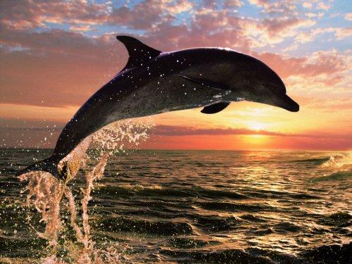 Το δελφινάκι