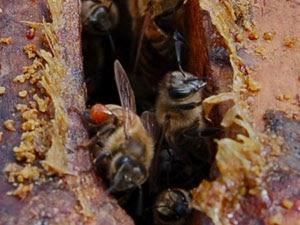 O melhor prego enverniza de umas respostas de fungo