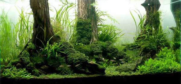 keindahan bawah air