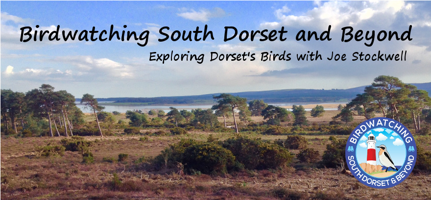 Birdwatching South Dorset and beyond