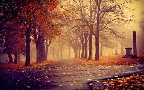 Morning Autumn Park