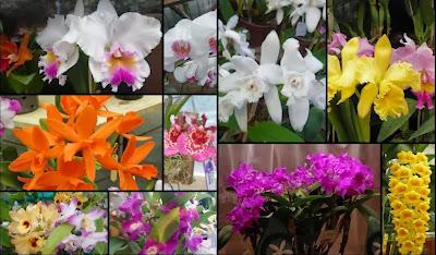 orquídeas;