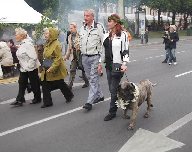 Собаки Татьяны Моисеенковой, кот Мензурка Picture+5968