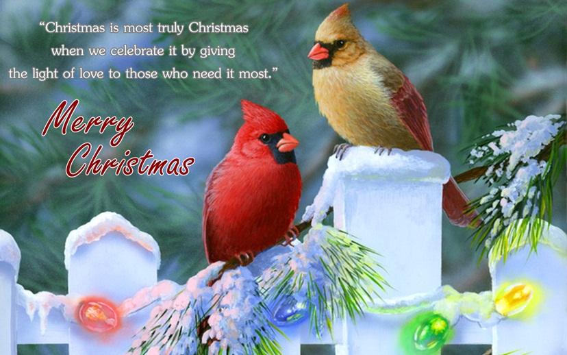 Merry Christmas Birds Image