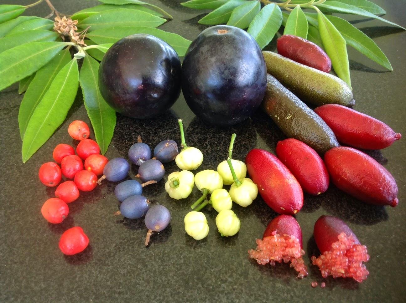 Date fruit in Sydney