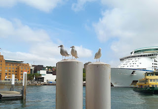Harbourbirds