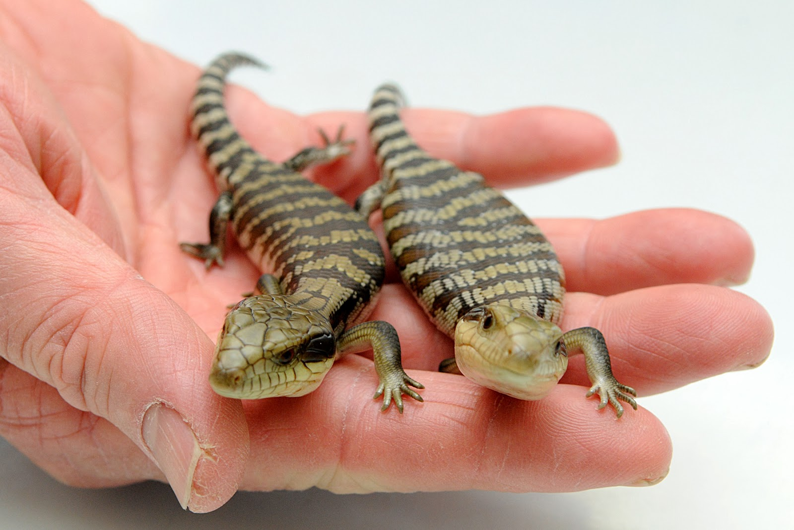 A 2 Z Reptiles Small Animal Ta...