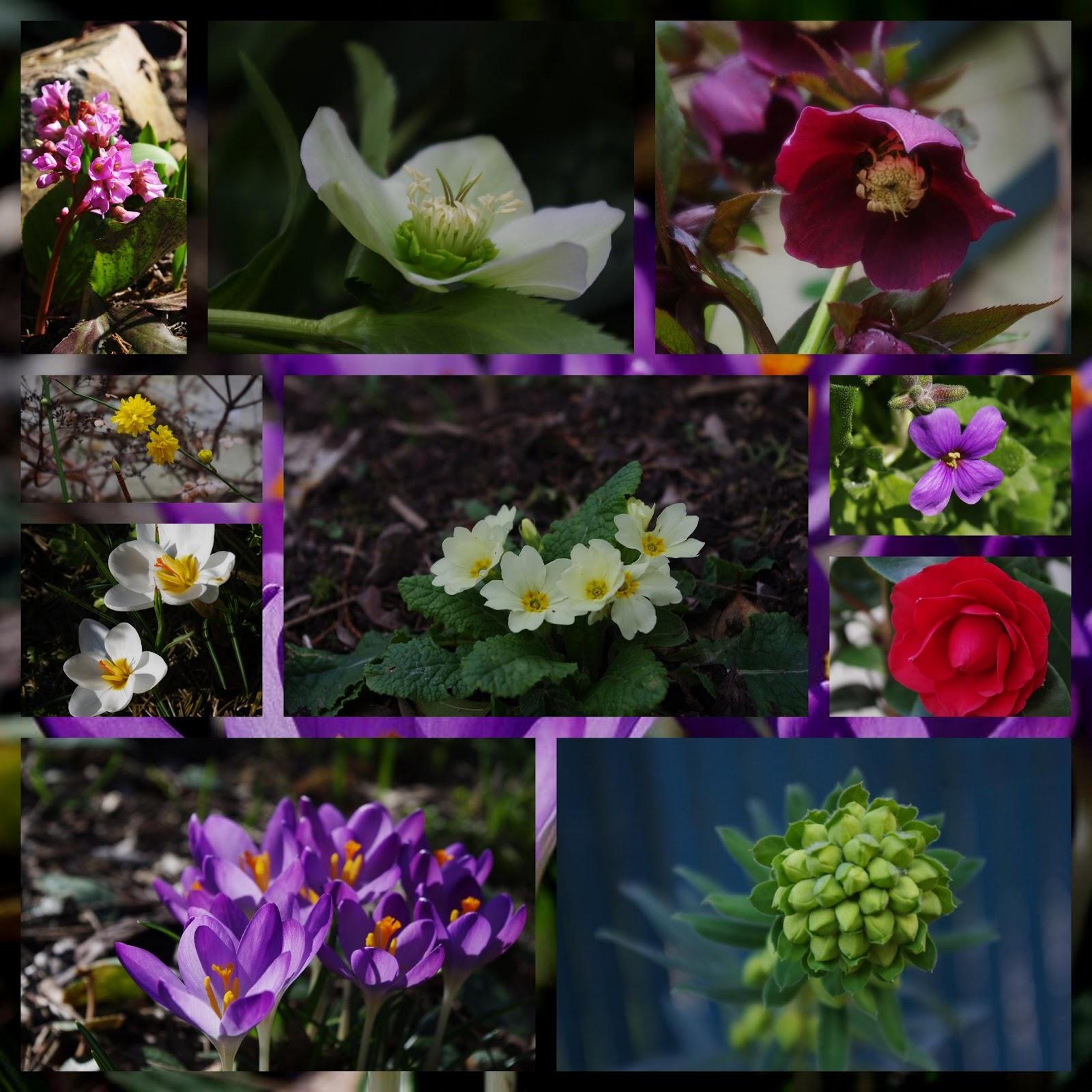 Le jardin des couronnes f vrier au jardin for Jardin fevrier