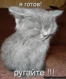 моя котоматрица