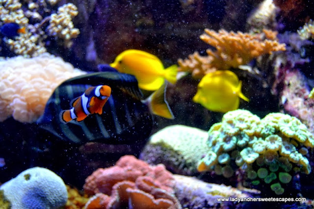 clown fish at the Lost Chambers