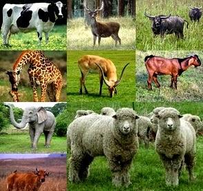Pengertian, Ciri-Ciri, Klasifikasi dan Peranan Mammalia