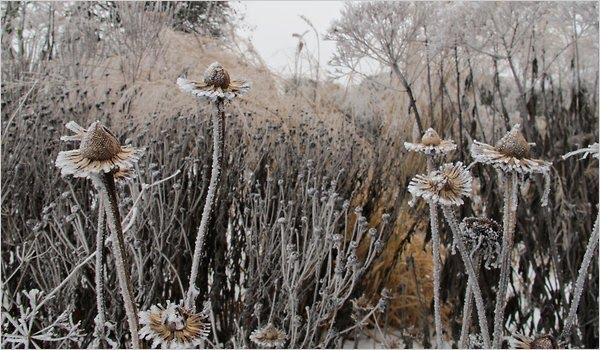 Neglected beauty winter garden beauty piet oudolf for Piet oudolf landscape architect