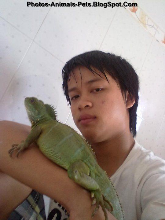 Pet chinese water dragon