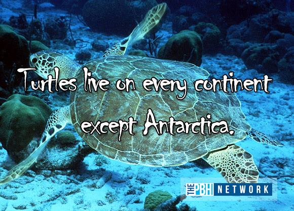 10 Amazing facts about ocean animals, amazing animals facts, ocean animal facts, turtle facts
