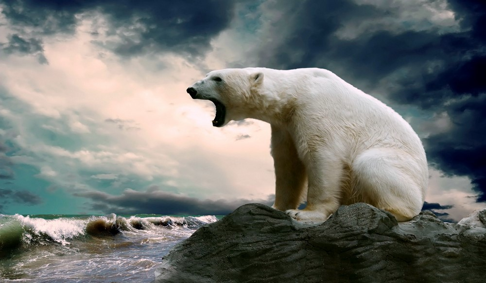 Hayvanlar Aleminin En Güzel Resimleri