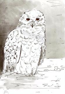 #inktober snowy owl