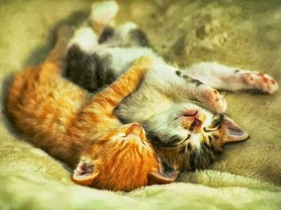 Beberapa Manfaat Tidur Menghadap ke Kanan